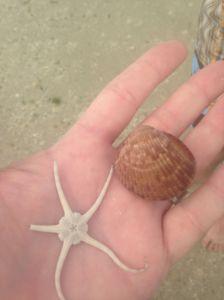 seashore3