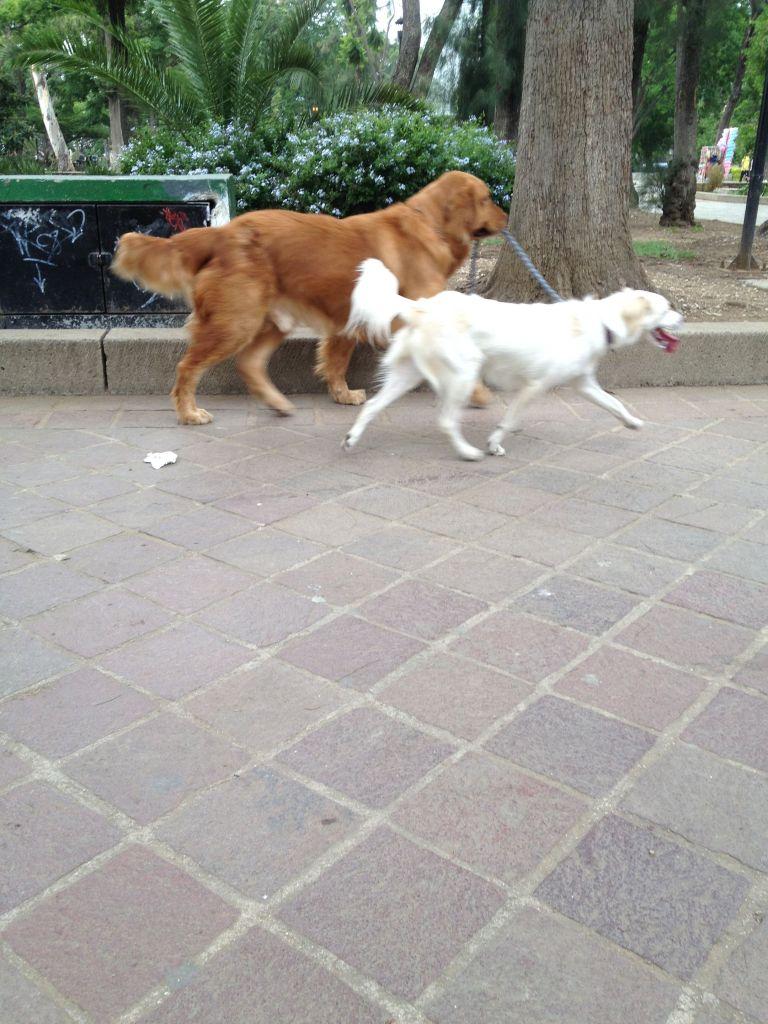 dogsjogging